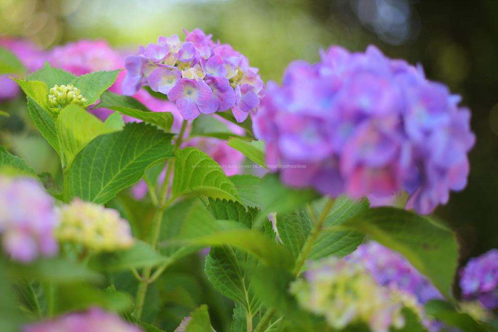 hotphoto_180604_07.jpg