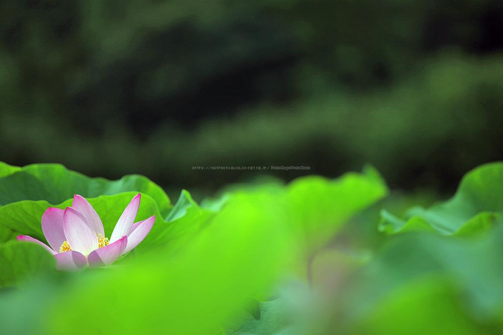 hotphoto_180709_04.jpg