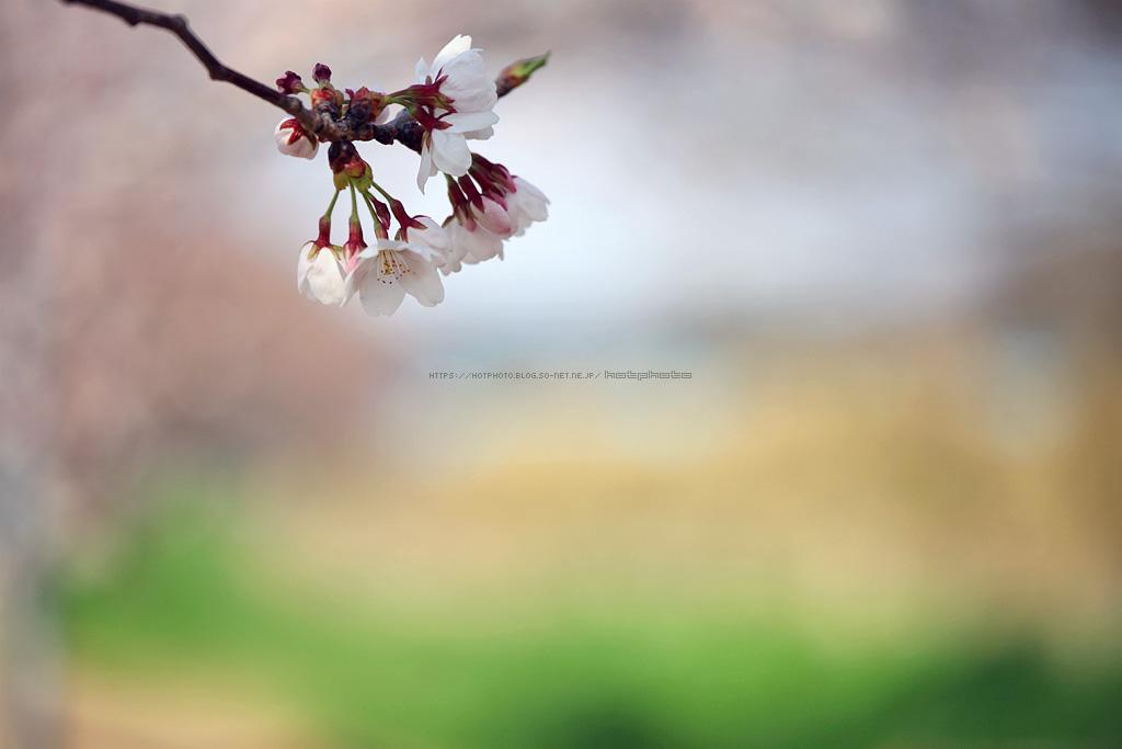 hotphoto_190331_06.jpg