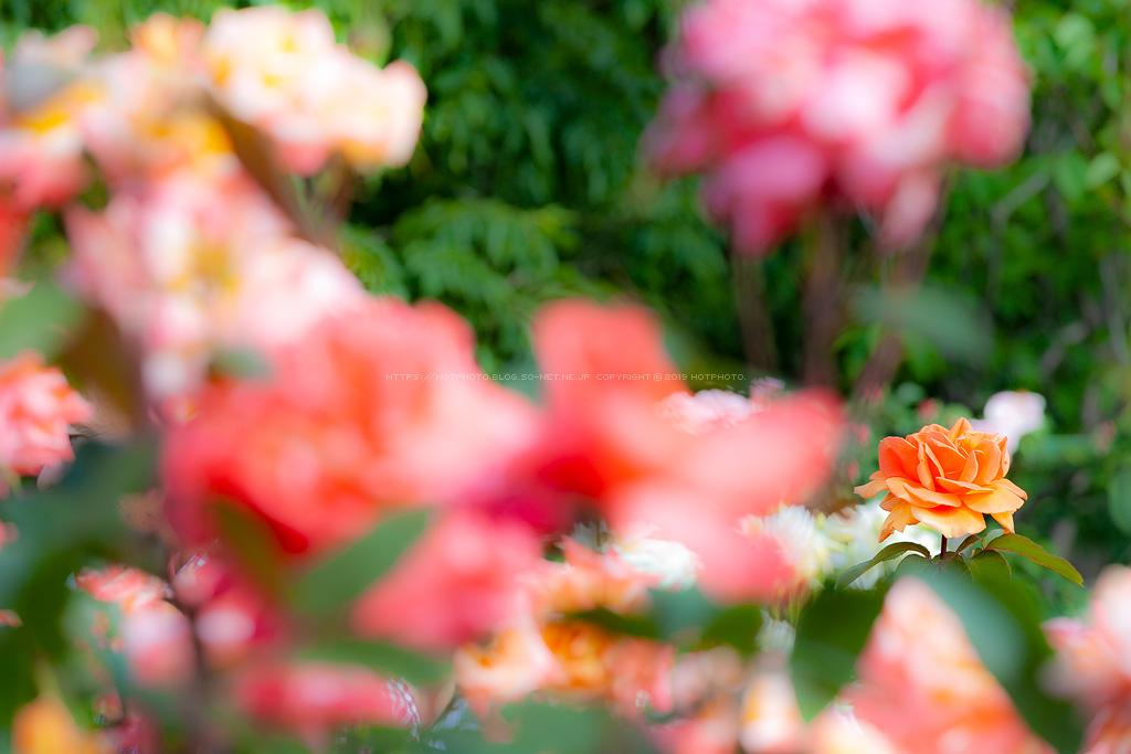 hotphoto_190518_03.jpg