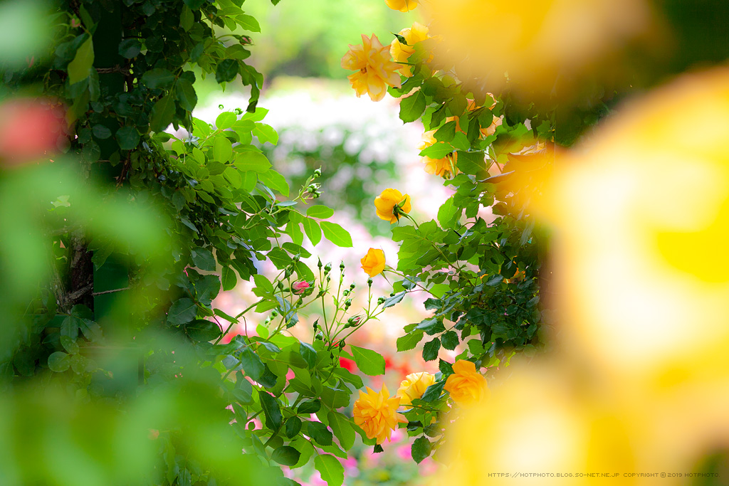 hotphoto_190518_08.jpg