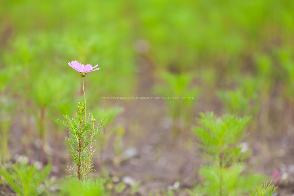 hotphoto_190721_02.jpg